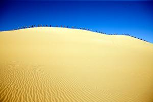 I love this photo of the Sahara Race 2009.